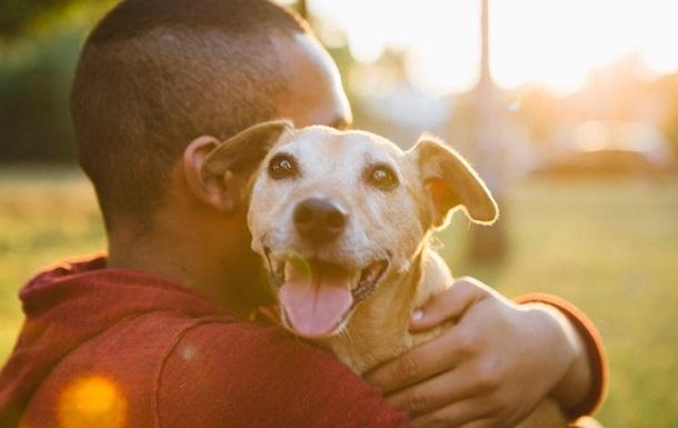 Восемь фактов были зафиксированы, когда собаки заразили человека неизвестным коронавирусом ранее.