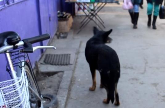 Безпритульні тварини на Закарпатті. У рік собаки – про життя собаче / ВІДЕО