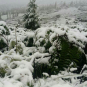 На Закарпатті серед літа випав сніг (ФОТО)