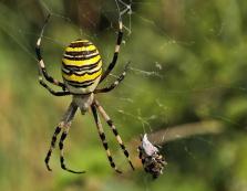 Батькам-закарпатцям радять попередити дітей про небезпечність гарного та барвистого павука (ФОТО)