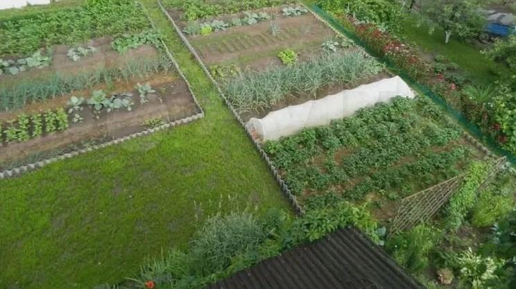 Все, що вирощено на ділянці більше 0,5 гектар, хочуть зараховувати до доходів і оподатковувати.