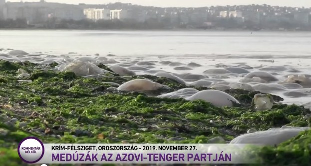 У плашці сюжету про медуз, викинутих на Азовське узбережжя, написано