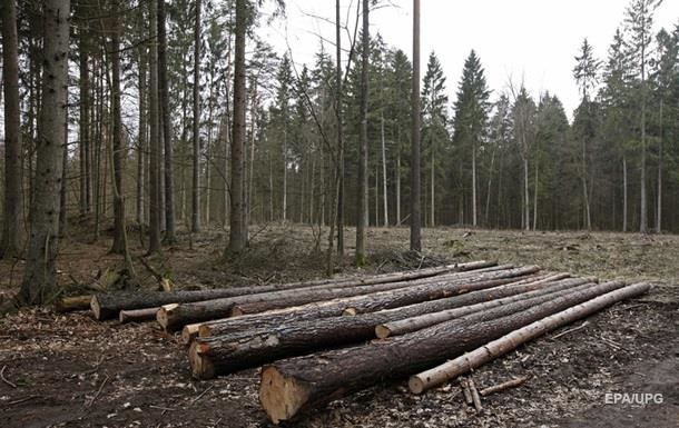За словами представника Кабміну, мораторій на вирубку лісу-кругляка став джерелом тіньової економіки.