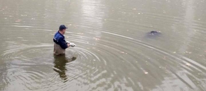 Прикарпатку, яку оголосили в розшук, витягнули мертвою із Дністра у сусідній області