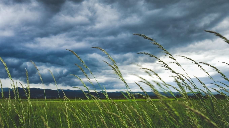На більшій частині території Закарпатської області та по м. Ужгороду очікується посилення вітру.
