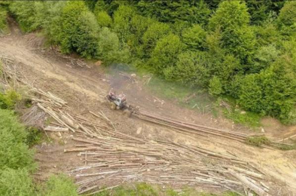 ДБР повідомило про судові справи стосовно чиновників Львівщини та Закарпаття щодо незаконних вирубок лісу в Карпатах.