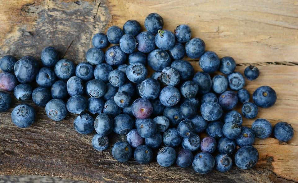 Лохина відома як брусниця та журавлина, що належать до сімейства вересових.