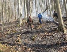 Неподалік Ужгорода знову горів ліс