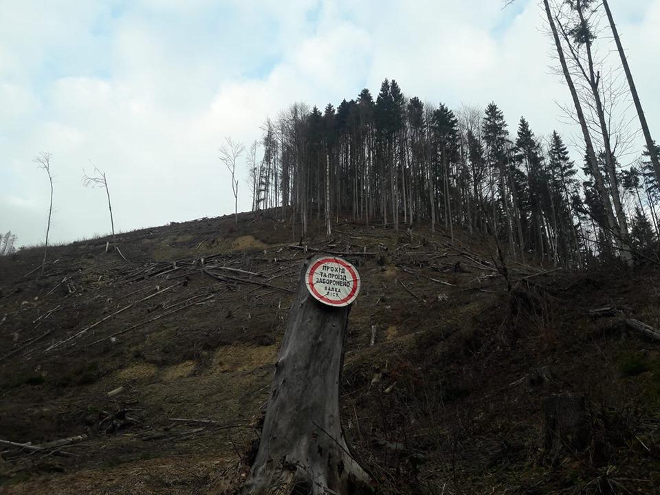 Чи збережеться ліс на схилах Карпат, або ж вони невдовзі стануть лисими? Чому лісівники вже не здатні впоратись з слідами суцільно санітарних рубок і кому вигідно занижувати якість ділової деревини?