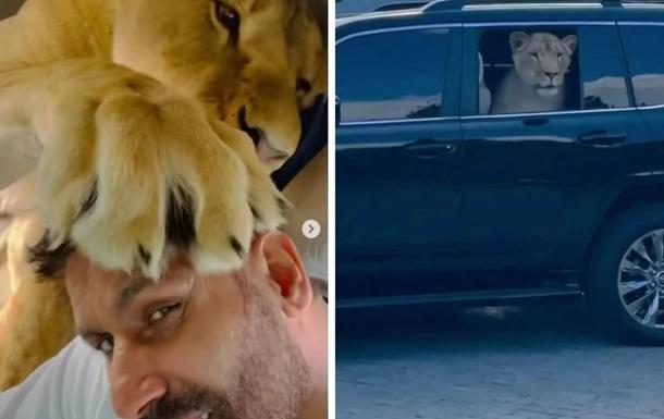 Африканський лев в авто облизує голову депутата і визирає з вікна Toyota Land Cruiser.