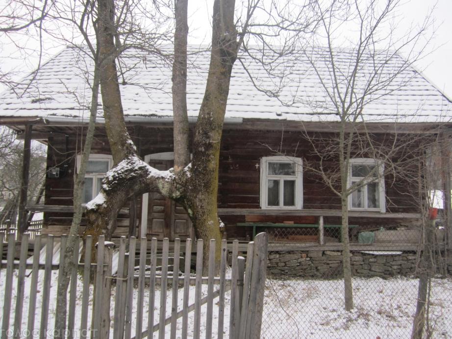 Два ясени утворили елемент Державного Герба України – тризуб