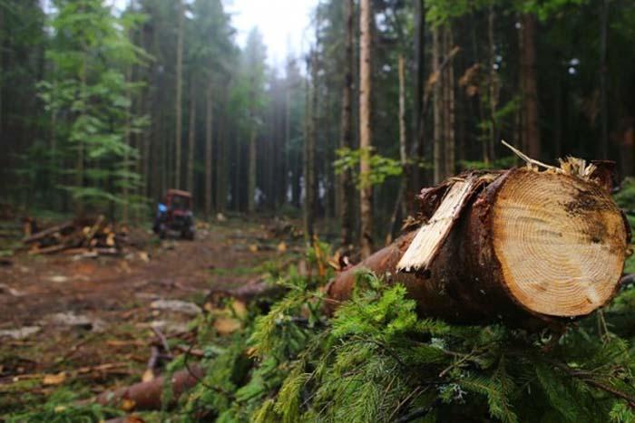 Службові особи через неналежне виконання службових обов'язків допустили незаконну рубку понад 700 дерев без дозволу (лісорубного квитка) невстановленими особами.