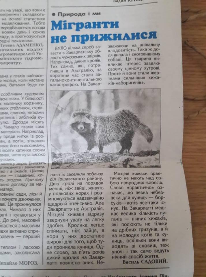 На Закарпатті місцеві хижаки винищили диких кролів та єнотовидного собаку, - ЗМІ
