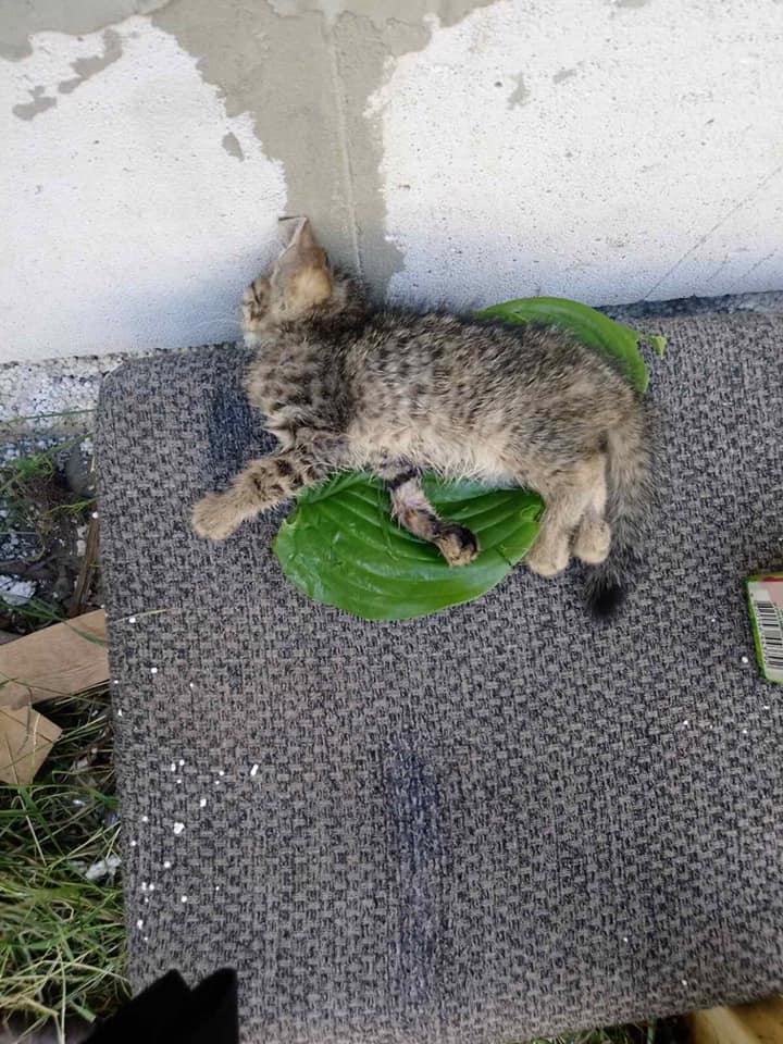 Одній тваринці вдалось вижити.