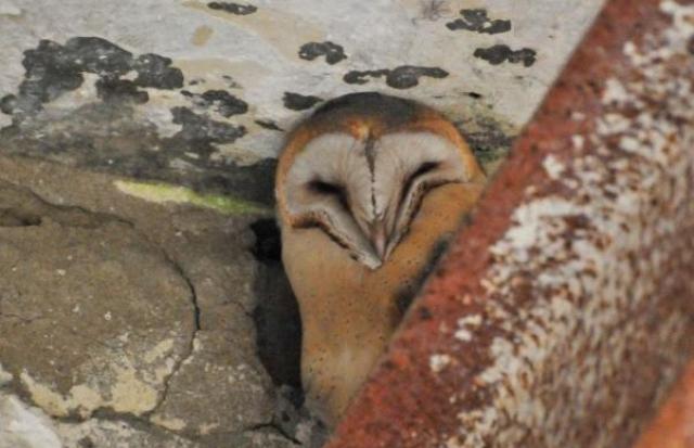 Унікального птаха, що завжди посміхається, зафільмували на Берегівщині.