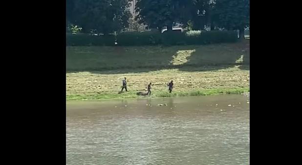 Сегодня в Ужгороде на берегу реки наконец косили опасную сосновскую свиней, которая при контакте с ней может вызвать серьезные ожоги и оставить страшные шрамы на память.