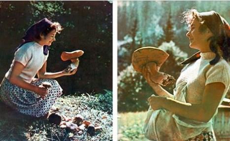 В мережі показали, як виглядали закарпатські гриби 50 років тому