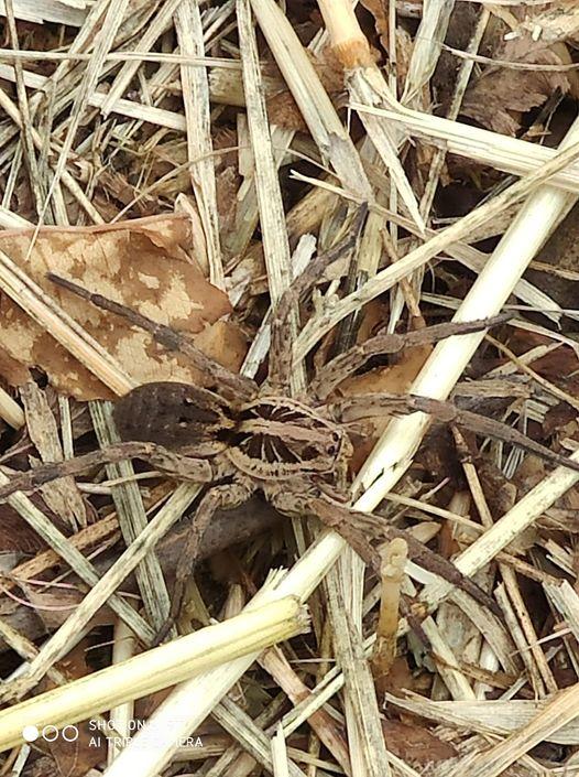 Знахідку виявили у Виноградові, на Чоній горі.