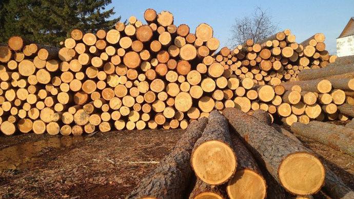 В уряді підготували законопроєкт, який має прийти на зміну чинній забороні експорту лісу-кругляку.