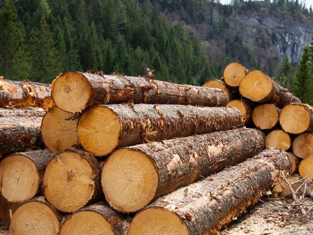 На думку журналіста Юрія Віннічука, Україна для Євросоюзу сировинна база лісу-кругляку.