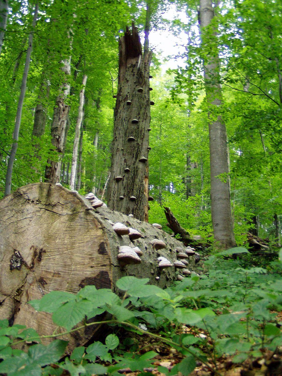 Місце падіння найбільшого у Європі метеориту, найстаріші дуби, яким понад 1200 років та праліси, які охороняє ЮНЕСКО.