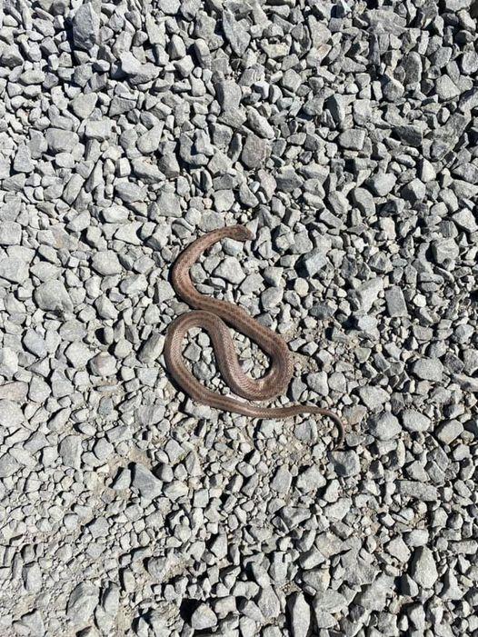 Фото зі змією, яку виявили на одній з вулиць Ужгорода, поділились у мережі Фейсбук.