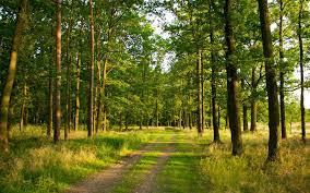 Прокуратура вимагає стягнення 595 962 грн збитків за порушення лісового законодавства.